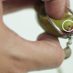 蛙身气孔的重要性